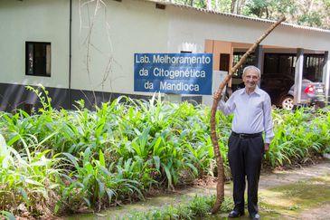 Professor Nagib Nassar, ao lado de um exemplar da mandioca Quimera II