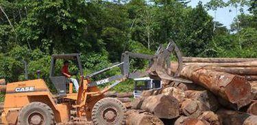Desmatamento é uma das causas da destruição da Amazônia