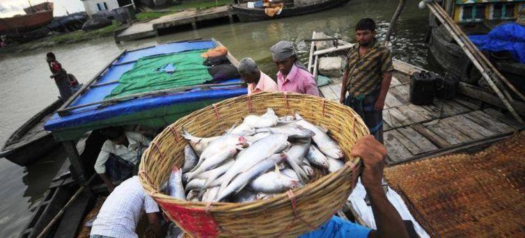 Mais de 90% dos pescadores em todo o mundo trabalham em pequenas empresas. ou de modo artesanal