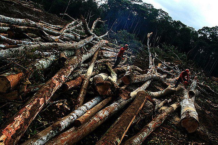Seguir Desmatamento canteiro de obras UHE Santo Antonio