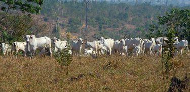 Prazo para que os produtores rurais façam o Cadastro Ambiental Rural (CAR) termina em 5 de maio de 2016