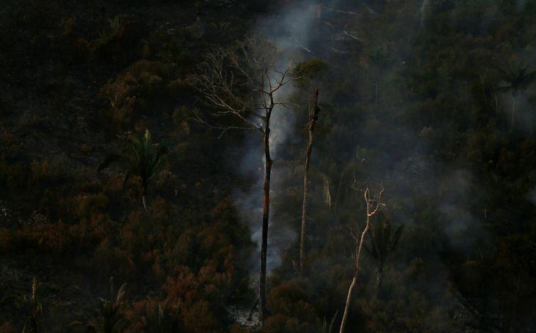 , Operação Verde Brasil: multas na Amazônia somam R$ 36 milhões