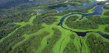 Curvas do Parque Nacional de Anavilhanas