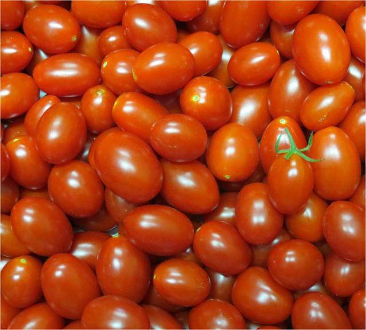 Embrapa cria novo tipo de tomate, rico em vitamina A e de cor alaranjada