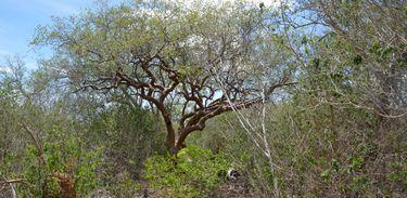 O Simpósio do Bioma Caatinga (Sibic), traz aos participantes atualizações e conhecimentos sobre ouso e manejo dos recursos naturais