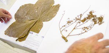 Universidade de Brasília e Inventário Floresta Nacional firmam parceria para ampliar o conhecimento da biodiversidade