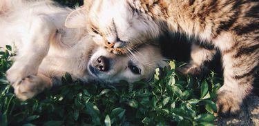 Projeto na Câmara dos Deputados propõe criação de Cadastro Nacional dos Animais Domésticos