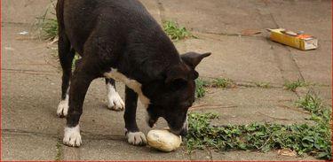 Brasil tem 30 milhões de gatos e cães abandonados