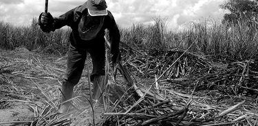 Trabalhador rural da zona canavieira de Alagoas. Outubro de 2006