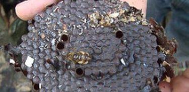 Apicultor  busca na fabricação caseira de álcool  como alternativa para aproveitar o subproduto do mel  de sua propriedade