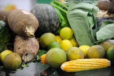 discute estratégias para a economia verde e o setor de alimentos orgânicos no Jardim Botânico