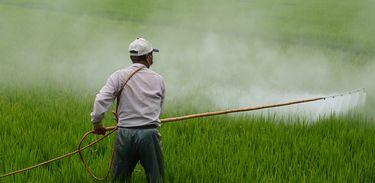 Aplicação de agrotóxicos em plantação de arroz