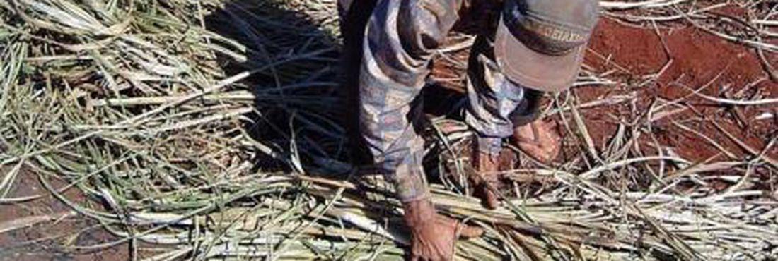 Pastoral da Terra: 25 mil pessoas são submetidas ao trabalho escravo