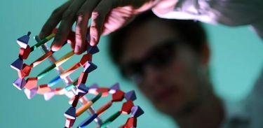 Traumas podem ser transmitidos geneticamente