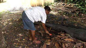 Moradores inscritos no programa Quintais Produtivos transformam seus jardins em hortas, no Rio