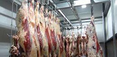Carne boi