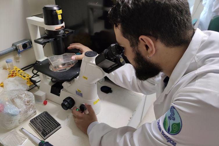 Estudo da UnB descobre que ômega-3 é nova arma contra o vírus Zika