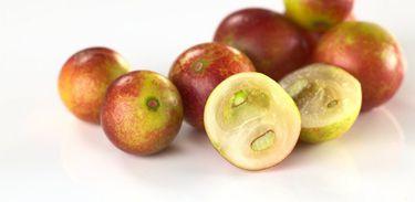 Camu-camu, fruto tradicional da amazônia