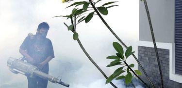 fumacê, dengue, mosquito da dengue