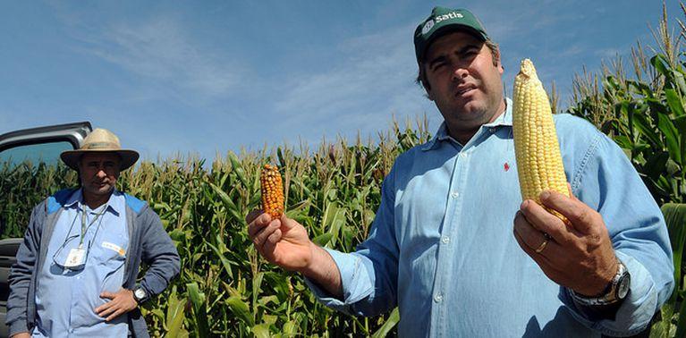Agricultores traçam estratégia para amenizar os efeitos da seca na produção