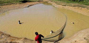 Em algumas regiões da Amazônia, piscicultura tem se tornado ambiente propício para o mosquito da malária, por ter criadouros em águas paradas e em ambientes silvestres.