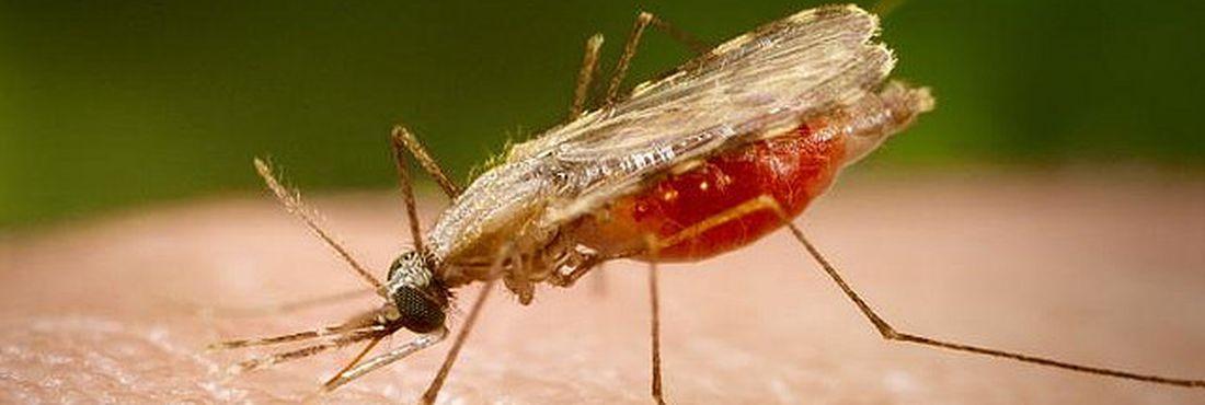 Novo medicamento contra a malária