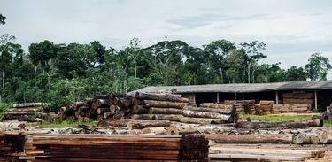 Madeireira em Mato Grosso
