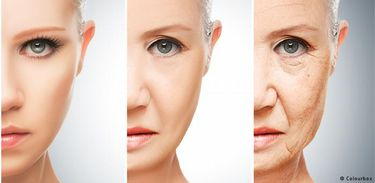 Como e por que envelhecemos?