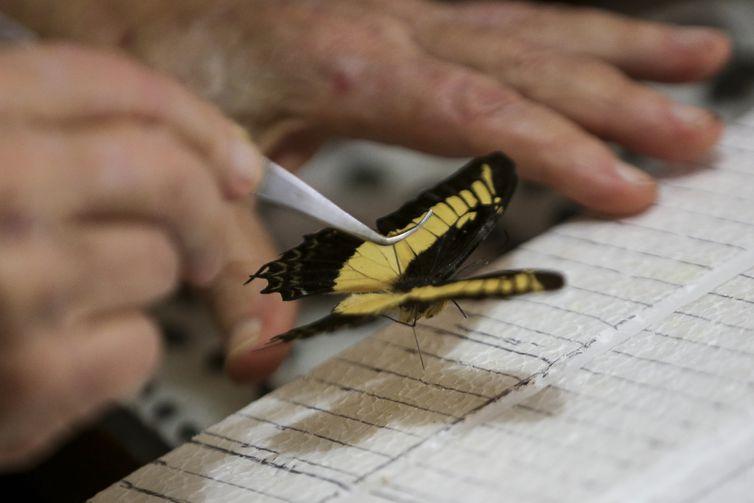 O médico Luiz Cláudio Stawiarski doará uma coleção de mais de 2 mil espécimes de borboletas e outros insetos para o Museu Nacional do Rio de Janeiro.