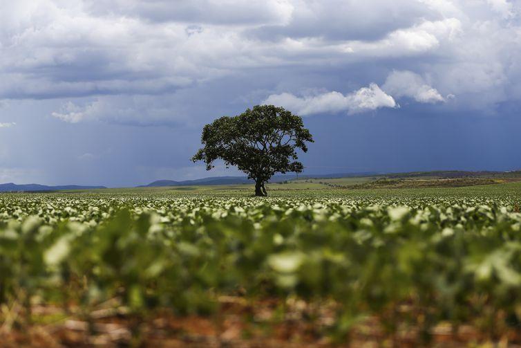 - Plantação de soja -  strong Marcelo Camargo/Agência Brasil /strong