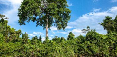 Floresta que margeia o Rio Iriri.
