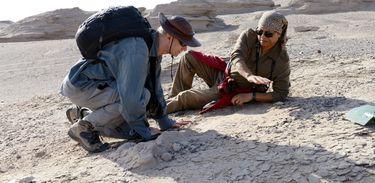 Pesquisadores descobrem embriões de pterossauros preservados