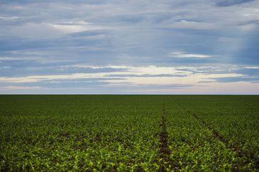Área de plantação de soja próxima ao município de Brasnorte, noroeste de Mato Grosso. (Marcelo Camargo/Agência Brasil)