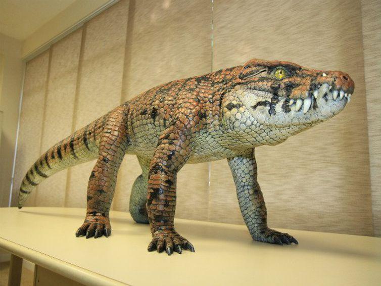 O fóssil do Caipirasuchus mineirus revela que o animal tinha um esqueleto articulado e possuía hábitos terrestres. Tinha um andar erguido do chão, similar ao de um cachorro.