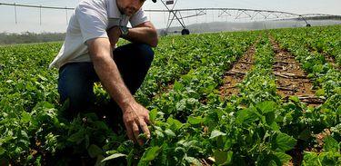 A Expedição Safra-Brasília analisou neste ano, a irrigação por pivô central