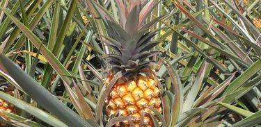 Fruticultura Orgânica