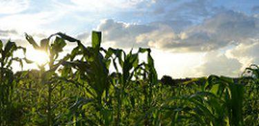 Técnicos da CONAB foram enviados para Gana para ajudar na criação de modelo agrícola