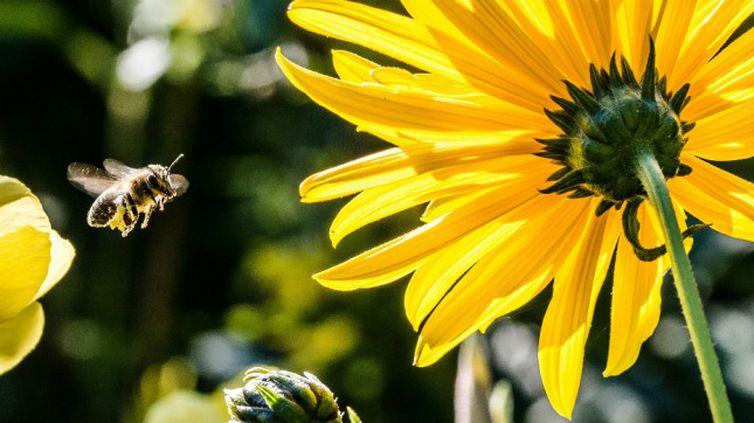 O soro antiapílico vem sendo testado em pacientes que tiveram múltiplas picadas de abelha