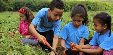 """O Projeto chamado """"SolidarESA"""" e """"Casa do Produtor Rural"""", busca pesquisar e produzir diversos alimentos, que são doados a várias comunidades."""