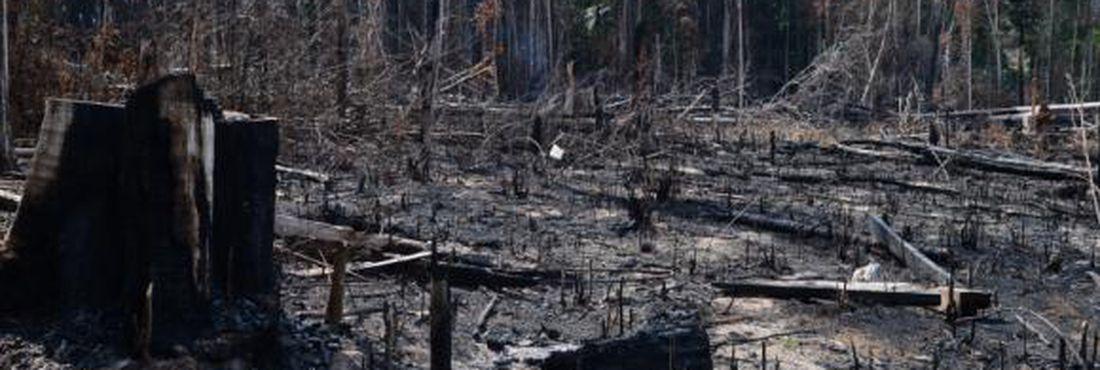 Ibama regulamenta suspensão de multas por desmatamento ilegal em áreas de preservação permanente (APPs) e de reserva legal aplicadas até 22 de julho de 2008