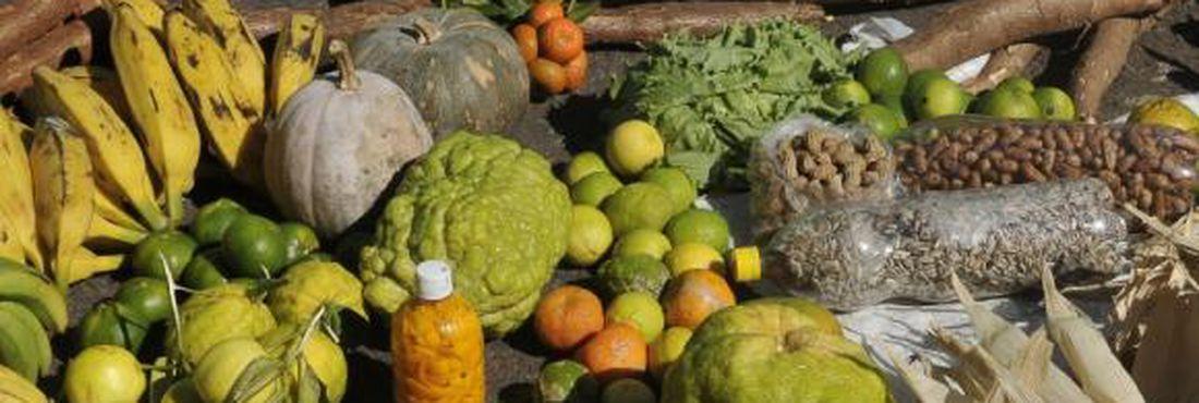 Expectativa é que versão final do Plano Nacional de Desenvolvimento Rural Sustentável e Solidário seja apresentada ainda este semestre