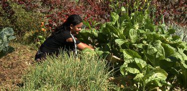 Curso do Senar capacita mulheres para gerir a propriedade rural