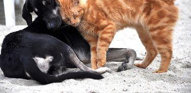 Cirurgias estéticas em animais são proibidas pelo Conselho Federal de Medicina Veterinária