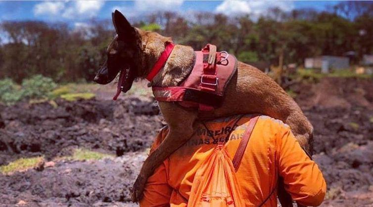 Resultado de imagem para cães em brumadinho