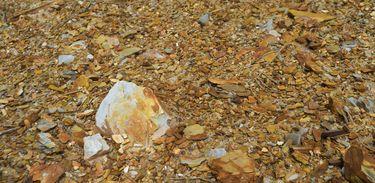 A proximidade entre as atividades de mineração e os bairros de Paracatu e a possibilidade de intoxicação por metais pesados liberados durante a extração do ouro preocupam a população