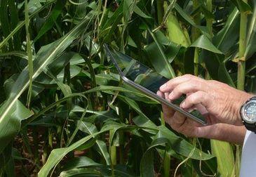 Aplicativo prevê tempestades e auxilia agricultores