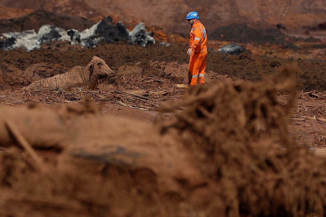 Um boi é visto na lama depois do rompimento de barragem de rejeitos de minério de ferro de propriedade da mineradora Vale, em Brumadinho (MG).