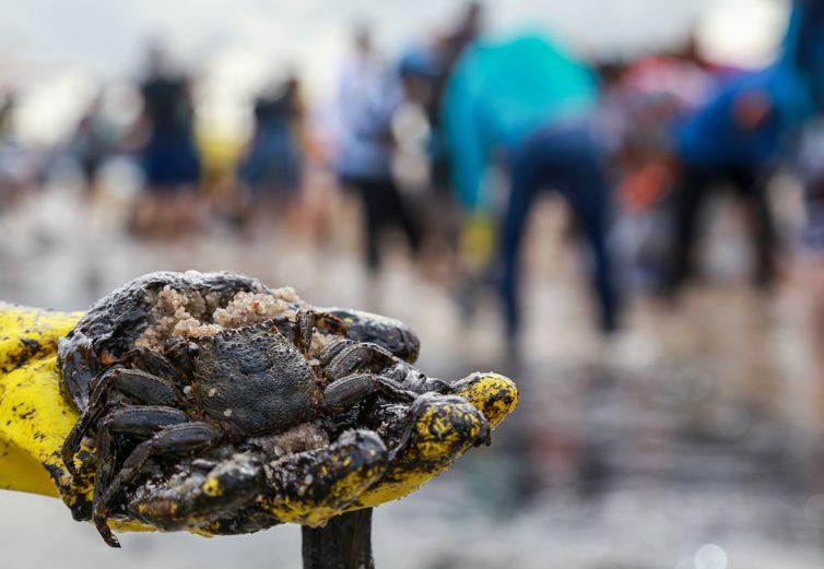 As pessoas trabalham para remover um derramamento de óleo na praia de Suape, em Cabo de Santo Agostinho, Pernambuco, Brasil, 20 de outubro de 2019.