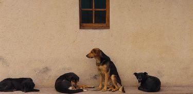 Cachorros, animais, abandonados