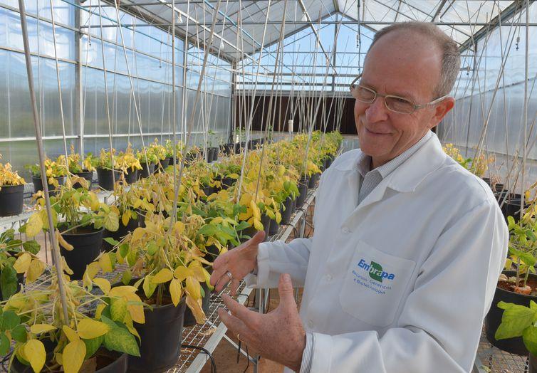 Entrevista com o pesquisador da EMBRAPA, Elíbio Rech, desenvolvedor da teia de aranha sintética, e biofábricas de preteinas(Wilson Dias/Agência Brasil)